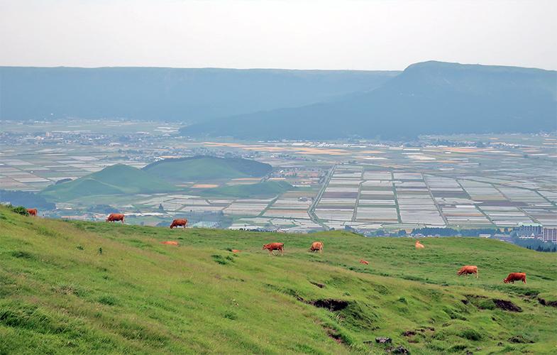 赤牛の放牧と阿蘇の農業地帯