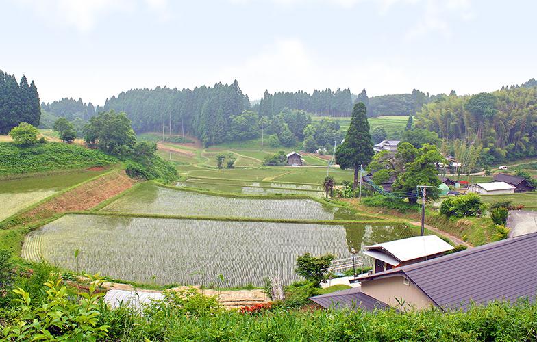 中山間地の棚田